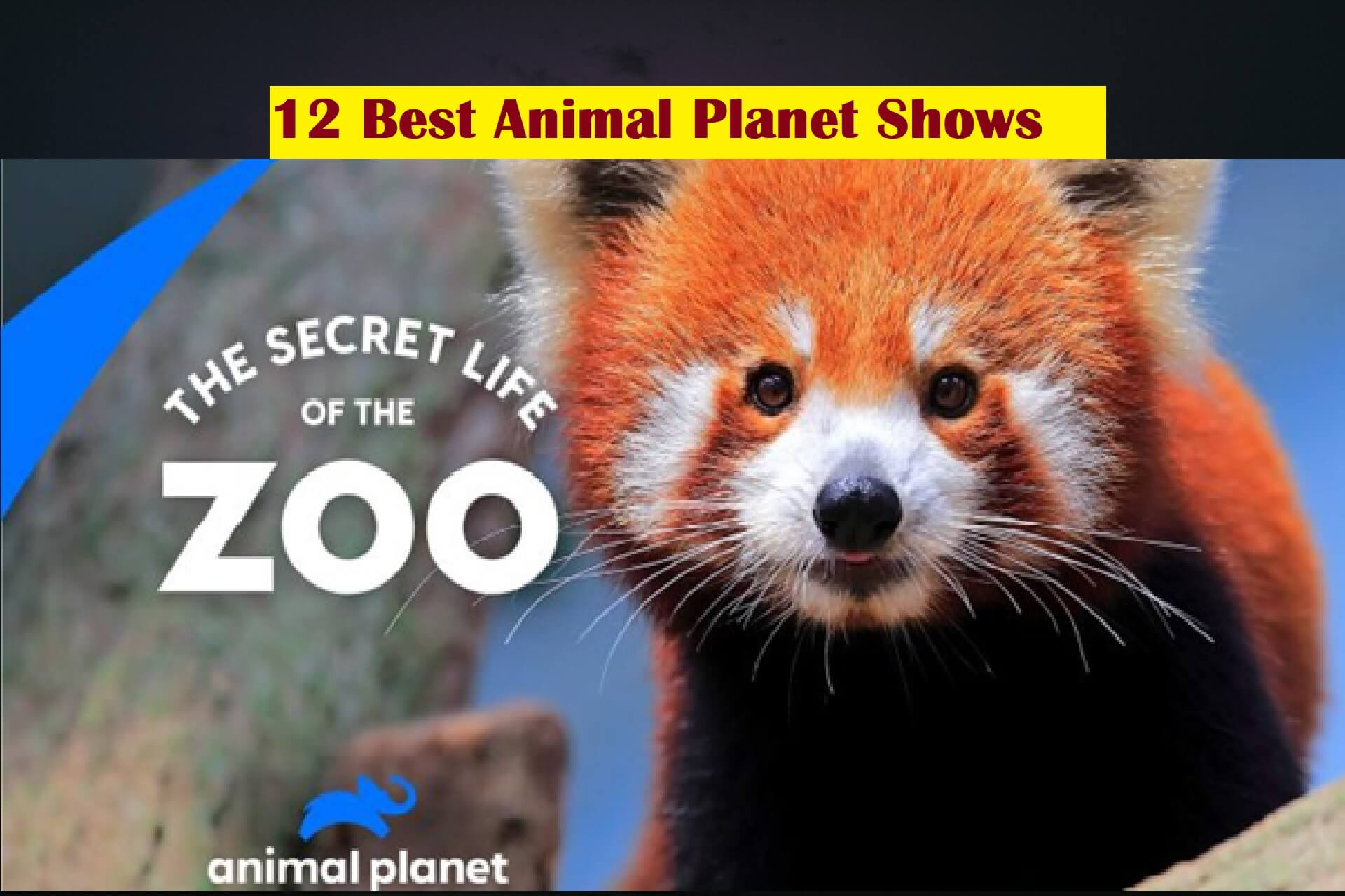 12 Best Animal Planet Shows You Can Watch Online